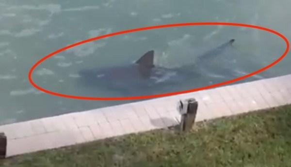 image308 Video   Un enorme tiburón en el patio