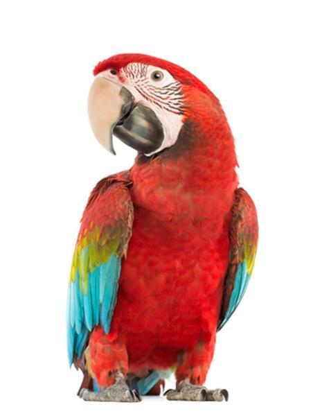 parrot17n 2 web Jeva culpa a su loro por accidente de tránsito