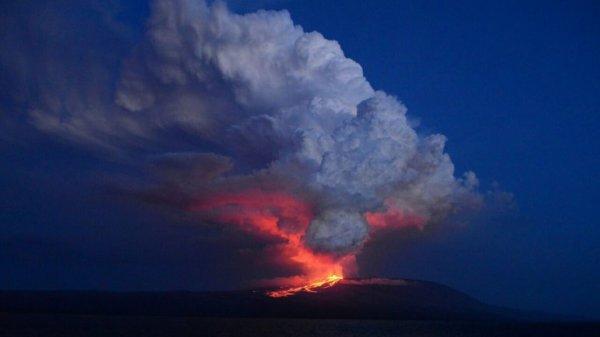 0012703828 Erupción de volcán amenaza especie única de iguanas rosadas