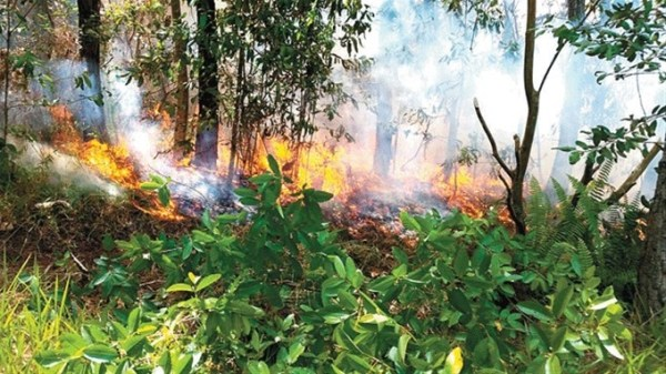 image127 Incendio en Loma Miranda habría sido provocado