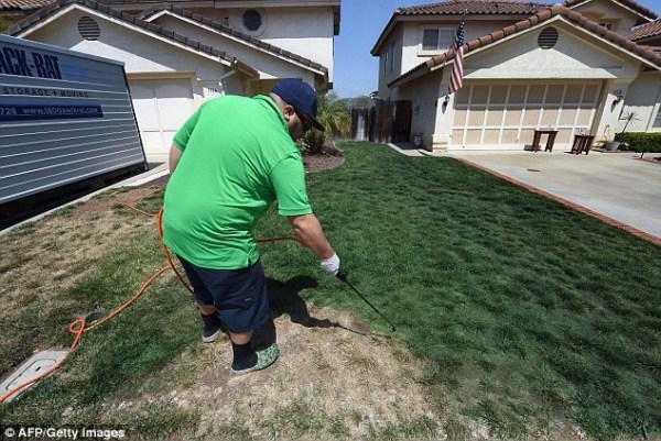 image317 En California pintan la grama para disimular la sequía