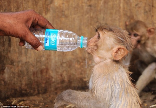 image637 Más de 800 muertos por ola de calor en India