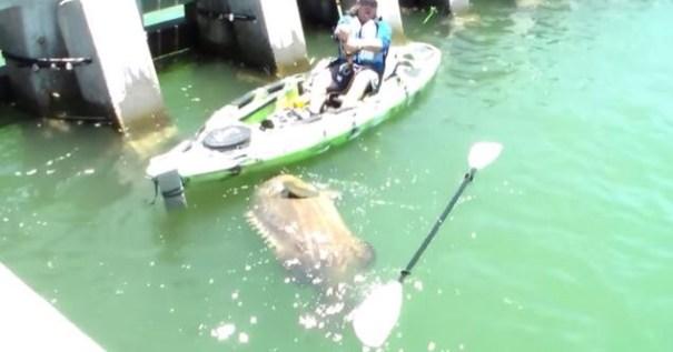 img 9206 Video   Pescador de la Florida atrapa mero de 552 libras