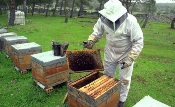 img 9438 La miel, un dulce negocio en RD