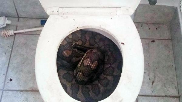serpientes