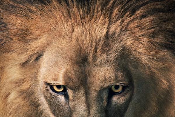 africa quedandose sin leones África quedándose sin leones