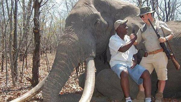 elefantes-zimbabue