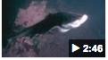 vs Tiburón vs pulpo