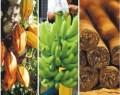 refer RD: Referencia mundial en cigarros premium y cacao y banano orgánico