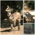 Animales zoo rd