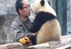 oso-panda-cuidador