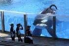 seaworld Seaworld eliminará espectáculos con orcas