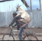 roba chivo Linchan hombre por robarse un chivo (RD)