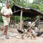 oiopio Vida en el campo:Llamando la Crianza