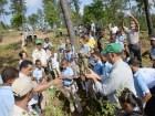 siembra Siembran 2,500 árboles en peligro extinción cuenca río Ozama