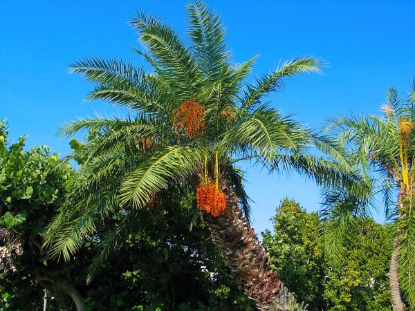 """flora rd La flora de República Dominicana se encuentra en """"peligro crítico"""""""