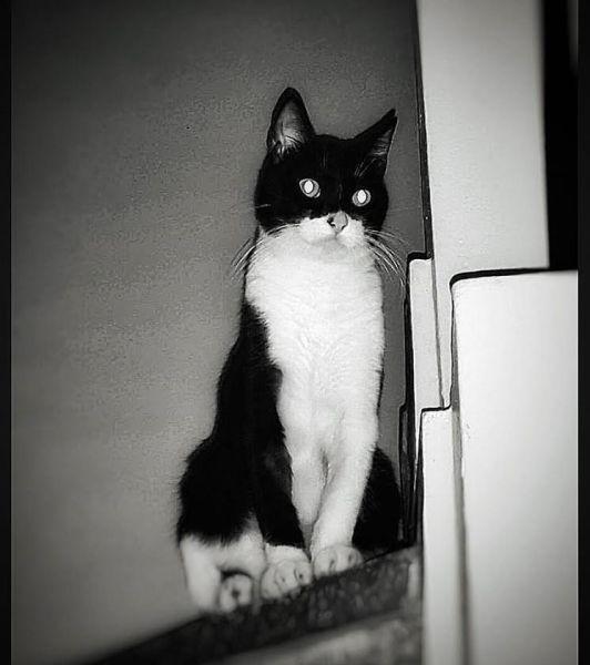 bataman BBC pregunta: ¿Por qué son tan egoístas los gatos?