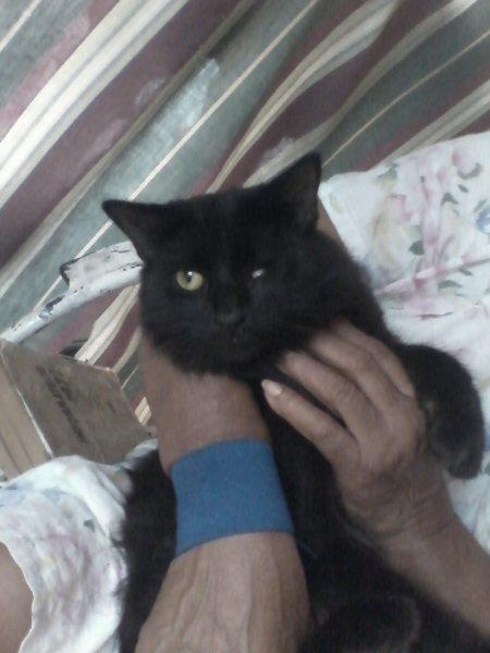 caramelo BBC pregunta: ¿Por qué son tan egoístas los gatos?