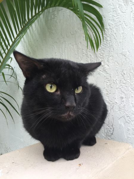 Gato charlie