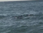 Tiburones NJ