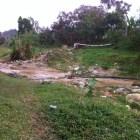 cons Apresamientos por delito ambiental en Constanza