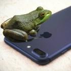 maco-phone
