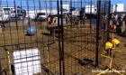 tigre Video: Tigre ataca a su entrenadora frente a unos niños