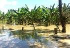 rd31 Productores agropecuarios desconocen grado de daños por lluvias