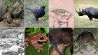 ocho especies animales Ocho especies animales que el hombre borró del mapa