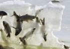 peces congelados Foto de unos peces congelados en pleno salto
