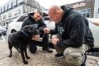 perro Perro encadenao por 15 años en NY