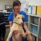 chien Terrible: Veterinaria se suicida con fármaco para sacrificar perros