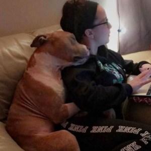 pitbull Foto de pitbull 'abrazando' su dueña se viraliza