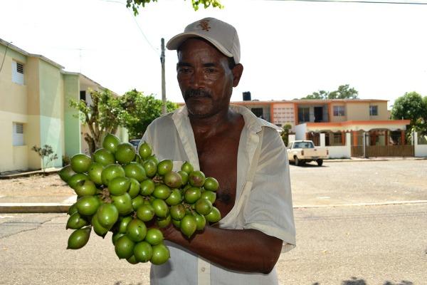 Foto por Timoteo Estevez/Remolacha.net