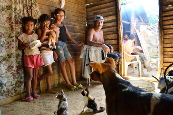 fotos, campo, animales mascotas (2)
