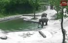 Elefante 300x188 Mira cómo este bebé elefante es rescatado por su mami y su tía