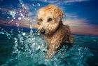 Perro 300x202 Los 10 perros más fotogénicos del mundo