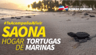 Saona 300x173 Saona, hogar de tortugas marinas