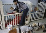 perros 150x107 Doña alberga 70 'viralatas' en su casa