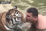 tigre 1 150x100 Video: El es loco con su tigre...