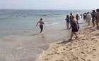 Massachusetts 300x186 Surfistas juyéndoles a un tiburón