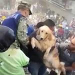 perrooo 150x150 Emotivo rescate de perro tras terremoto en México