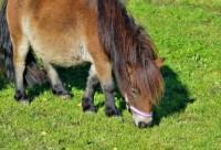 poni 200x136 Erdiache! Tipo viola un poni en pleno zoológico