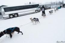 一个狗队一共 12 条狗,大概拉 6 个成年人