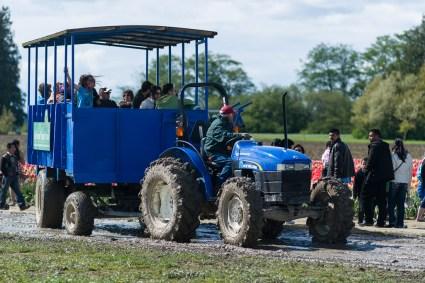 老外也喜欢搞个这种拖拉机到农田边上走走,赚点外快