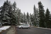 可见山上松树上挂雪