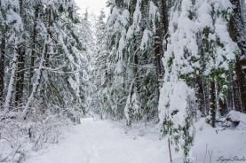 我们并没想走到 Upper Falls,因为这一路上积雪慢慢变深,时间渐晚,我们就此转回最接近 Wallace Lake 的那一处休息的地方。