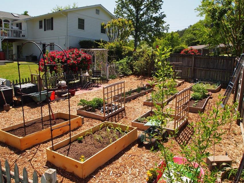 красивый сад для ленивых фото