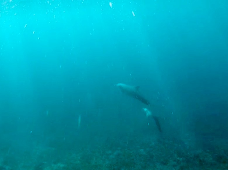 Mawan Island snorkelling with dolphin pod mother and baby