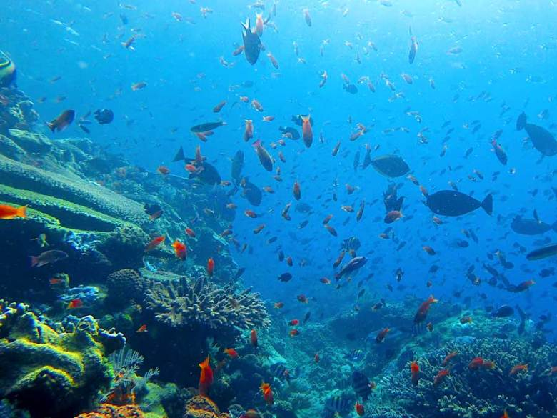 komodo national park snorkelling